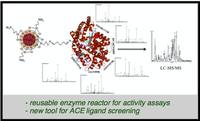 Angiotensin converting enzyme immobilized on magnetic beads as a tool for ligand fishing