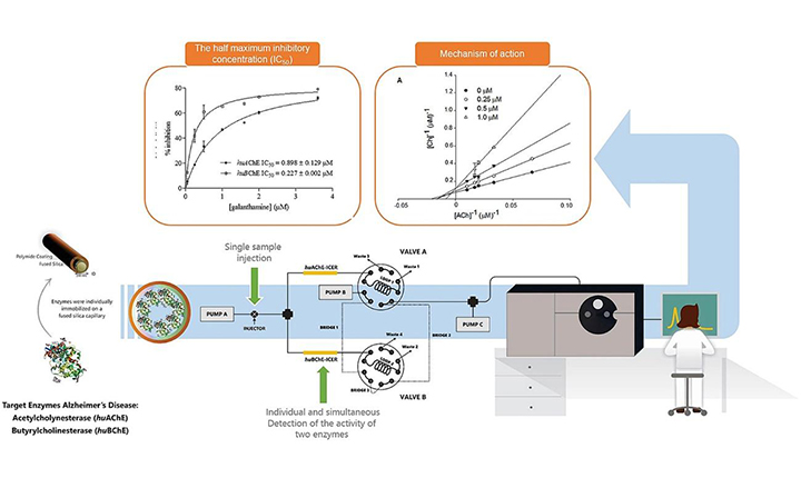 A novel on-flow mass spectrometry-based dual enzyme assay