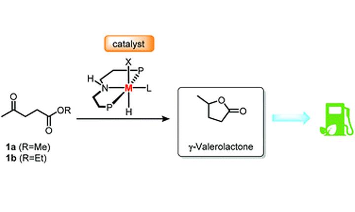 Efficient catalytic hydrogenation of alkyl levulinates to γ-valerolactone